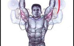 Desenvolvimento Arnold (ombro)