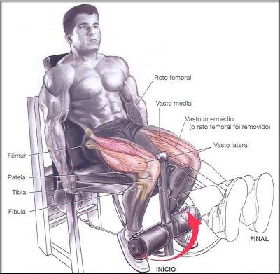 cadeira-flexora