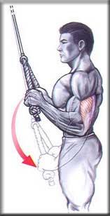 Tríceps Puxador