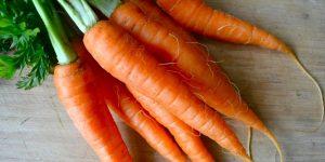 Cenoura cenoura