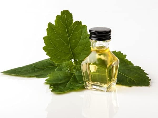 Beneficios do oleo de Patchouli