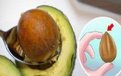Os 10 Benefícios do Caroço de Abacate Para Saúde