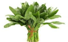 12 Benefícios do Espinafre – Para que Serve e Propriedades do Espinafre!