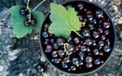 12 Benefícios da Groselha Negra – Para que Serve e Propriedades da Groselha Negra!