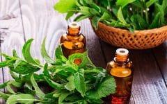 10 Benefícios de Hortelã Pimenta – Para que Serve e Propriedades de Hortelã Pimenta!
