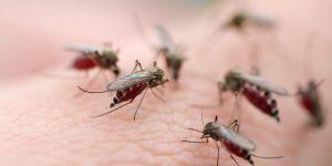 Malária 1