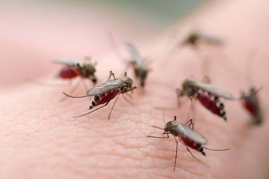 Malária – O que é, Causas, Sintomas e Tratamento!