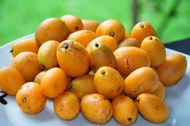 10 Benefícios do Suco de Cajá – Para que Serve e Propriedades do Suco de Cajá!