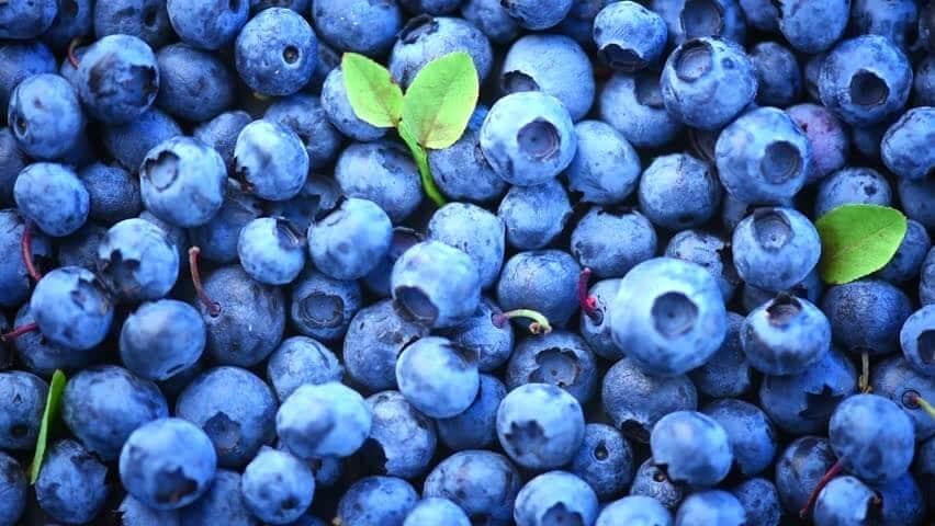 Benefícios da Vitamina de Mirtilo