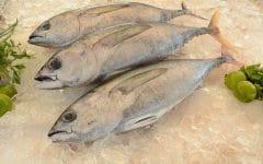 10 Benefícios do Atum – Para que Serve e Propriedades do Atum!