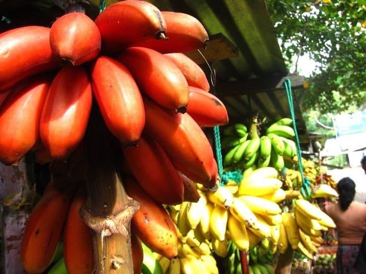 Benefícios da Banana Vermelha