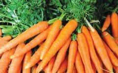 13 Benefícios da Cenoura – Para que Serve e Propriedades da Cenoura!