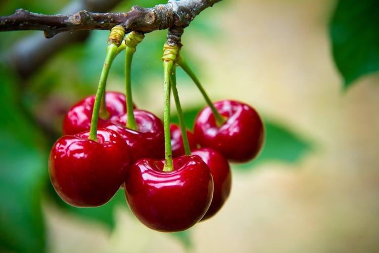 15 Benefícios da Cereja – Para que Serve e Propriedades da Cereja!
