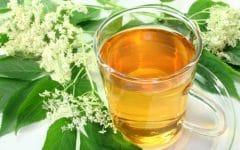 Os 10 Benefícios do Chá de Boldo Para Saúde