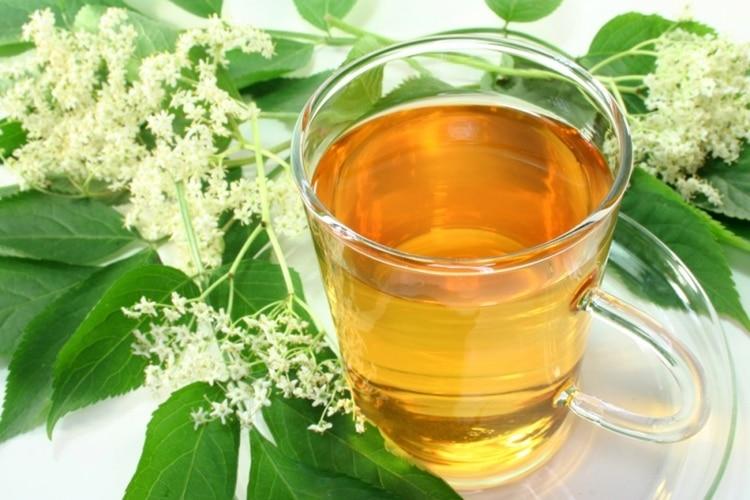 chá de boldo 1