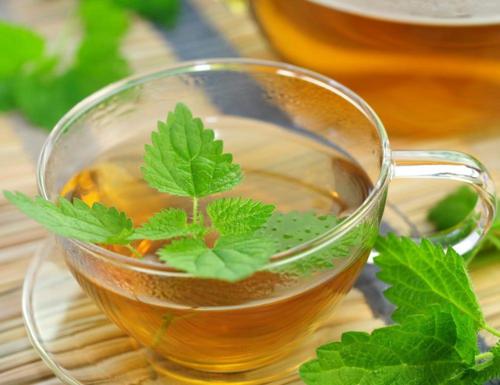 chá de erva gateira 2
