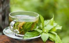 Os 12 Benefícios do Chá de Mastruz Para Saúde