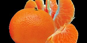 chá de tangerina 1