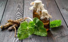 Os 10 Benefícios do Chá de Bardana Para Saúde