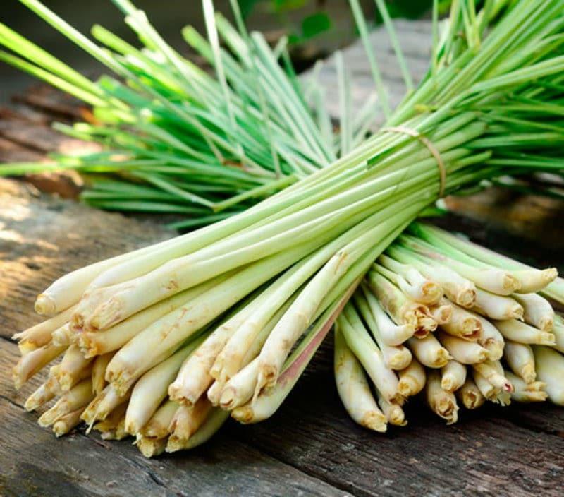 Os 10 Benefícios do Lemongrass Para Saúde