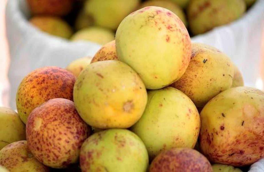 12 Benefícios da Mangaba – Para que Serve e Propriedades da Mangaba!