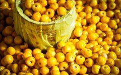 12 Benefícios do Murici – Para que Serve e Propriedades do Murici!