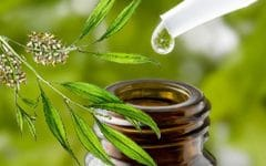 Os 10 Benefícios do Óleo da Árvore do Chá Para Saúde
