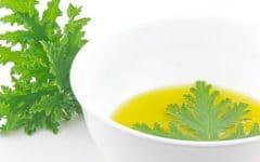Os 10 Benefícios do Óleo de Citronela Para Saúde