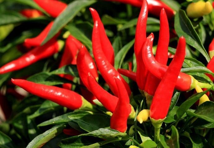 Beneficios da Pimenta Caiana
