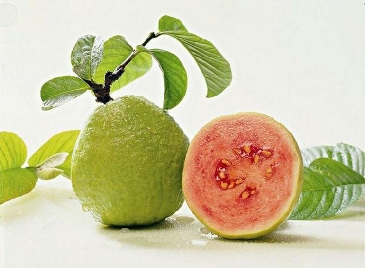 Beneficios da Semente da Goiaba