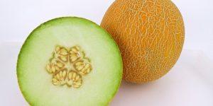 semente de melão