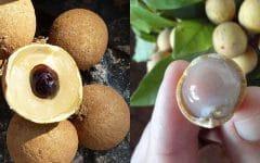 Os 10 Benefícios do Suco de Pitomba Para Saúde!
