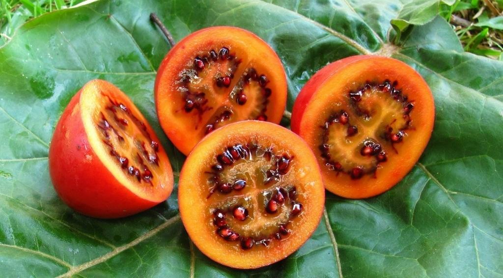 Benefício do Tomate Japonês