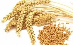 10 Benefícios do Trigo – Para que Serve e Propriedades do Trigo!