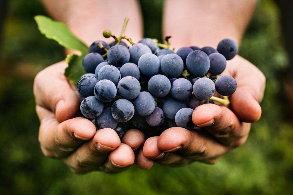 Benefícios da Uva