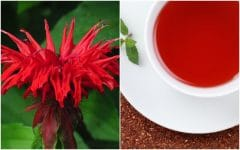 Os 7 Benefícios do Chá de Oswego Para Saúde