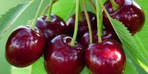 Os 14 Benefícios da Cereja Para Saúde 1