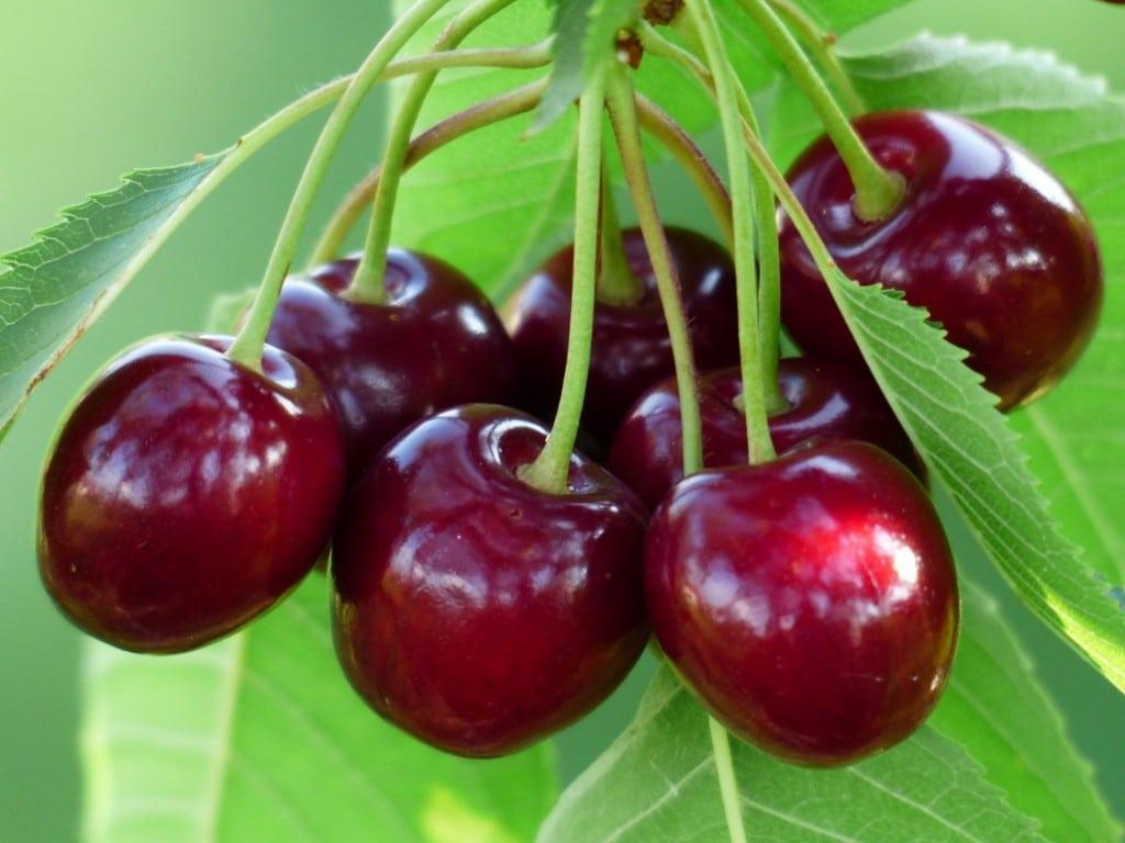Os 14 Benefícios da Cereja Para Saúde!