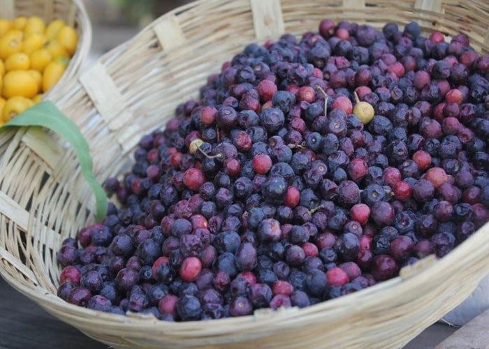 Fruta Falsa