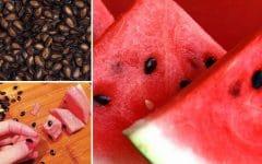 Os 10 Benefícios da Semente de Melancia Para Saúde!