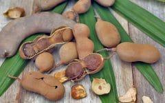 Os 8 Benefícios do Tamarindo Para Saúde!