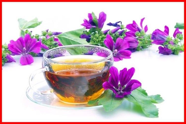 Chá de Malva Para Perder Peso