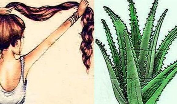 Com Esse Ingrediente Natural Seu Cabelo Crescerá Como Nunca!