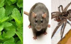 Receita de Planta Medicinal Para Eliminar Insetos!