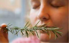 Esta Planta Pode Aumentar a Memória até 75% em 3 Dias!